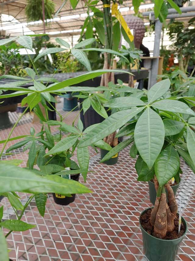 houseplants-4