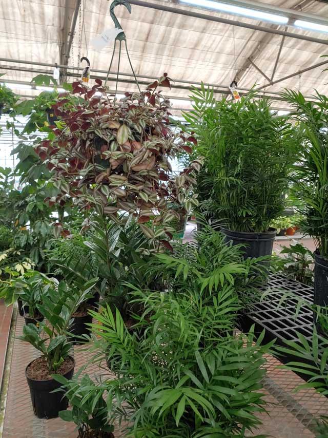 houseplants-5