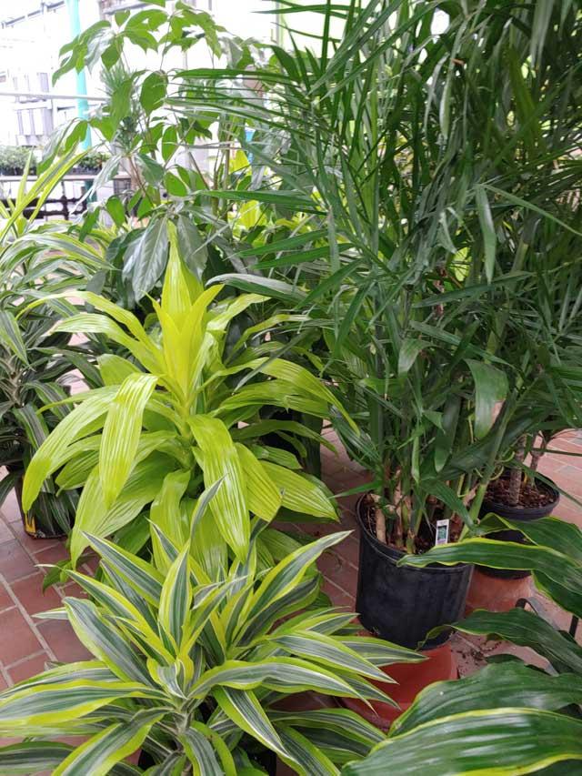 houseplants-7