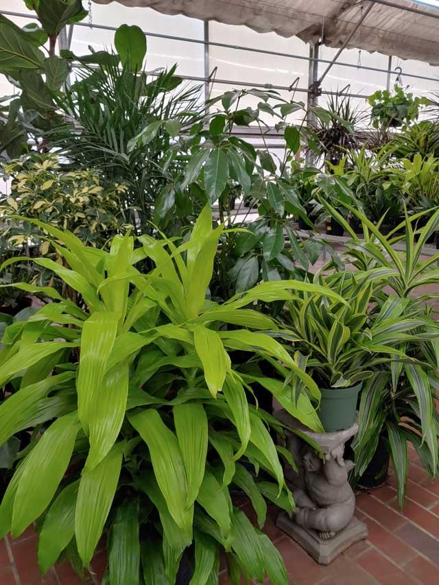 houseplants-8