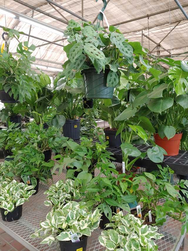 houseplants-9