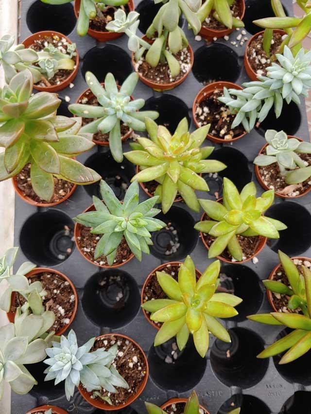 succulents-2