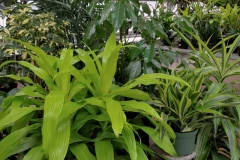 houseplants-8