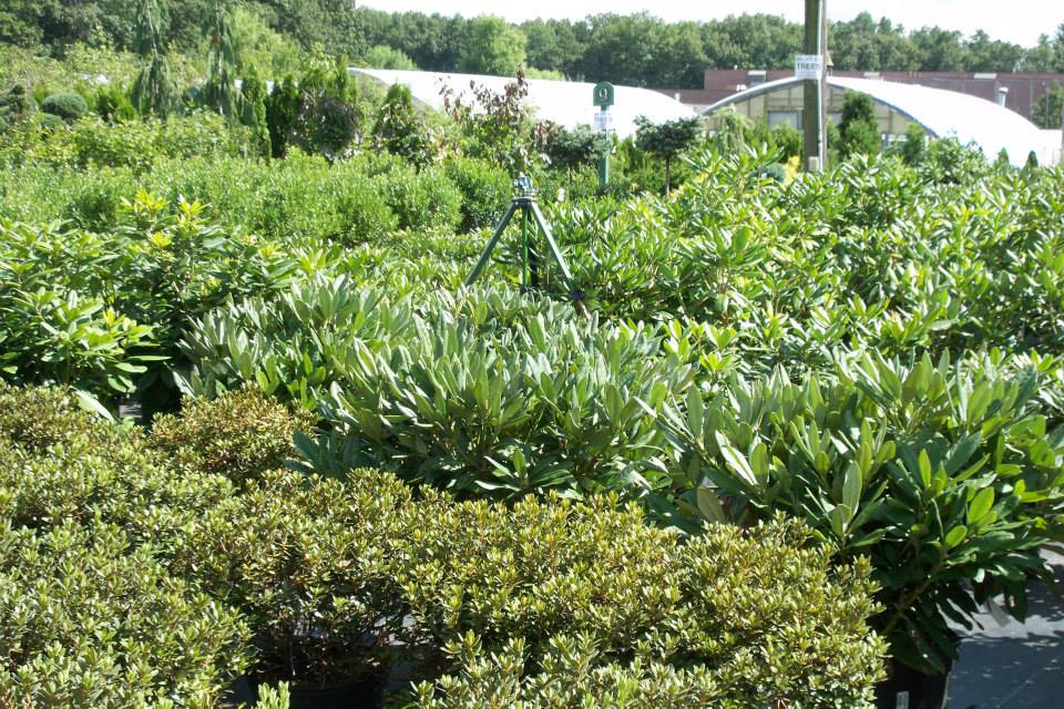 16-shrubs-14
