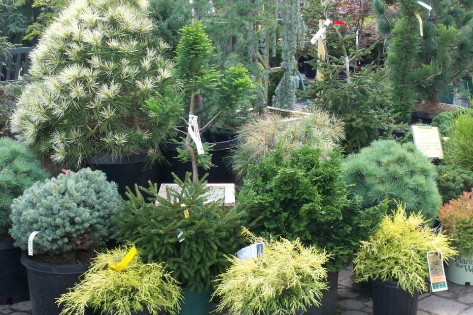 16-shrubs-15