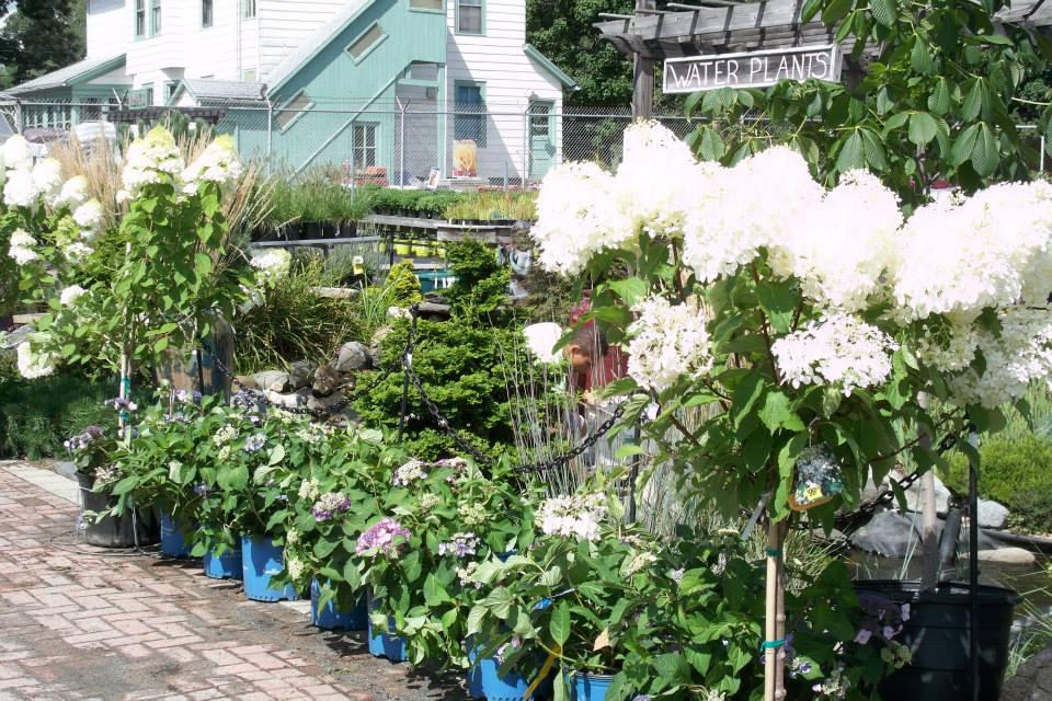 16-shrubs-3