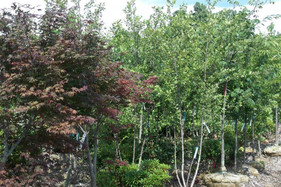 16-shrubs-8