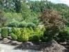 16-shrubs-5